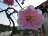 2012_0328_165945-CIMG0023.jpg