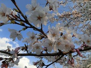2012_0417_170138-CIMG0096.jpg