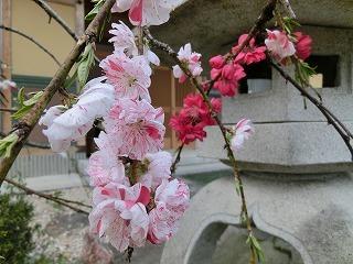 2012_0419_172918-CIMG0112.jpg