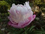 2012_0528_071535-CIMG0311.jpg
