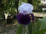 2012_0528_071727-CIMG0315.jpg
