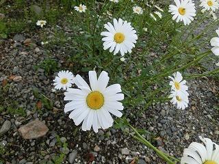 2012_0530_172407-CIMG0320.jpg